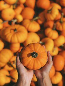courges potirons légumes automne